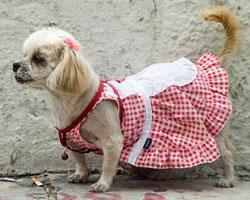 Без гардероба жизнь собачья
