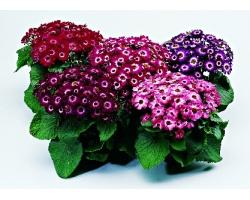 Приобретаем комнатные цветы
