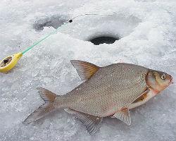 Где искать рыбу по первому льду?