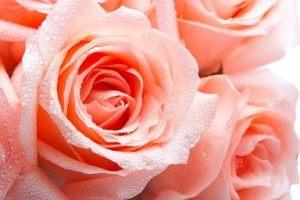 slavarosca.ru - интернет магазин цветов