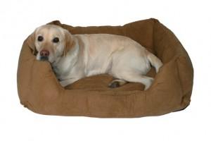 Преимущества лежанок для собак