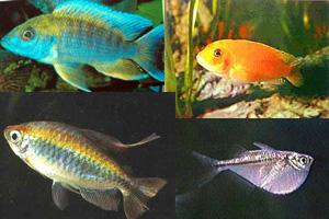 Рыбки подарят вам спокойствие и радость