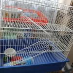 Где приобрести поилки для грызунов и птиц?
